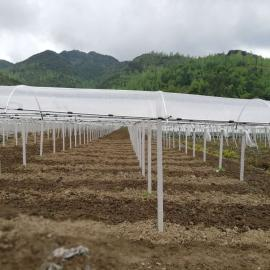 果树避雨栽培棚