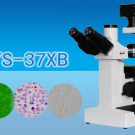 三目倒置生物显微镜WYS-37XB