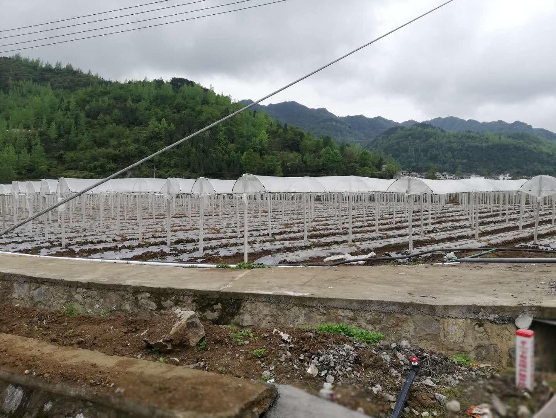 葡萄避雨栽培棚