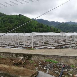辣椒避雨栽培棚