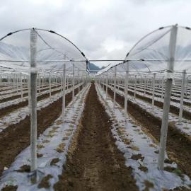 黄瓜避雨栽培棚