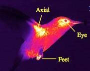 EcoDrone UAS-4无人机红外热成像遥感系统