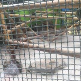 生产隔离不锈钢方孔轧花网/动物园隔离筛网3mm小孔钢丝网厂家