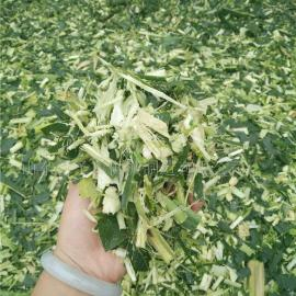 玉米秸秆铡草机生产厂家 圣泰牌多功能铡草机价格