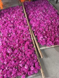 节能环保玫瑰花蕾烘干机 智能玫瑰花烘干箱