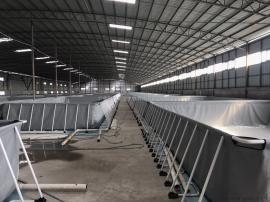 工厂化养殖南美白对虾 水产养殖设备
