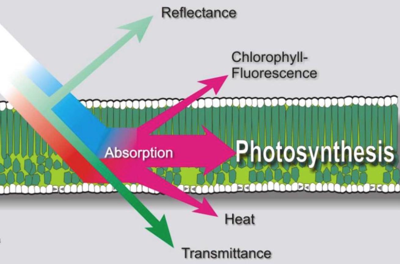 模块式植物表型成像分析系统