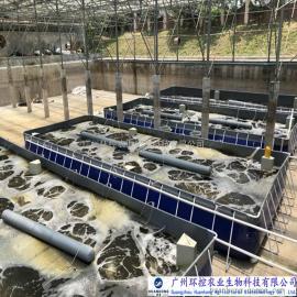 鲫鱼工厂化养殖 高密度养殖 循环水养殖