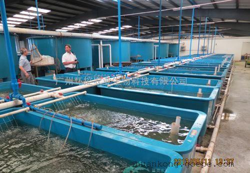 厂房循环水养殖设备 循环水养鱼工厂化 水产养殖设备