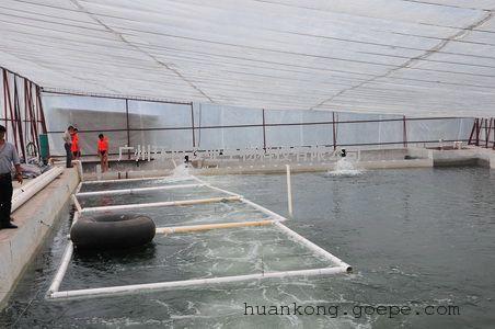 工厂化循环水养殖系统 工厂化养鱼 项目案例工厂化 循环水养殖设�