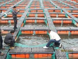 水产养殖专业增氧设备 增氧机 蛋白质分离器 紫外线杀菌器
