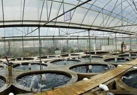 循环水高密度养殖