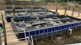 水产养殖设备网箱工厂化养鱼