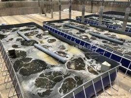 工厂化养殖设备 淡水鱼工厂化循环水养殖设备 蛋白质分离器