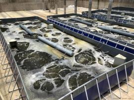悬浮跑道式玻璃钢流水养殖槽、集装箱养殖用水处理方案