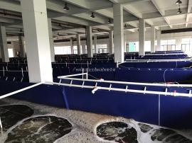 小型工厂化循环水设备 循环水养殖系统