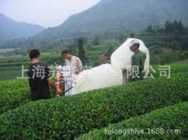 川崎茶机双人采茶机、SV100采茶机川崎茶叶采摘机进口T320