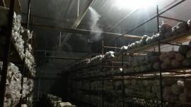 供应冷库保鲜加湿器