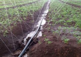 农田节水设备多孔微喷带产品简单介绍