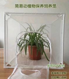 养虫笼 纱网养虫笼 实验笼