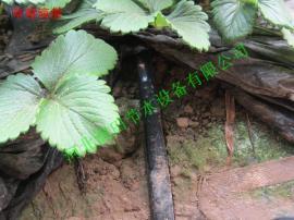 霈泽φ16滴灌系统滴灌带的施肥优点