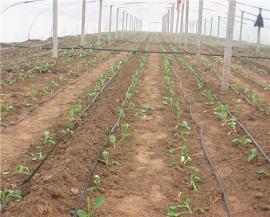 霈泽灌溉滴灌管(带)安装注意