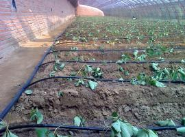 果树灌溉水肥一体化管道介绍