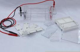 琼脂糖水平电泳仪 电泳槽 核酸电泳仪