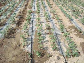 水稻膜下滴灌技术滴灌设备
