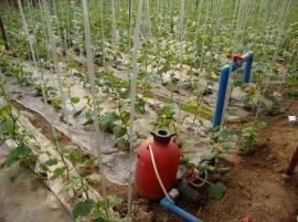自动灌溉施肥设备报价