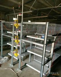 阶梯式 层叠式 蛋鸡笼育雏鸡笼/清粪机 自动化养鸡设备
