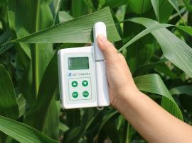 叶绿素测量仪
