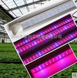 LED植物组培日光灯