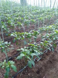 润田节水灌溉设备滴灌系统滴灌带