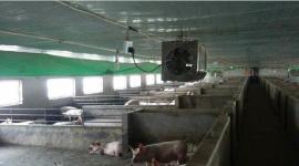 铨聚QJ-8004K壁挂除臭机预防猪瘟鸡瘟杀菌消毒