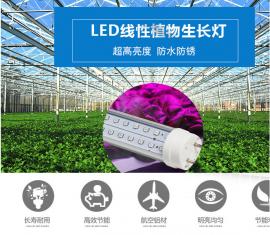 农作物LED植物生长灯