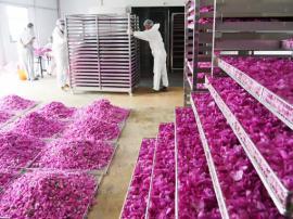 玫瑰花低温空气能脱水除湿烘干机系统设备