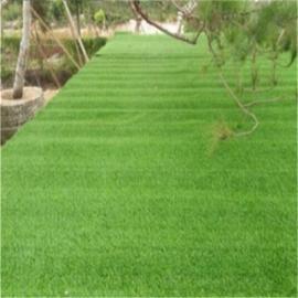 景观草坪 优质草坪 游泳池边草坪 自然人工草坪 装饰草坪