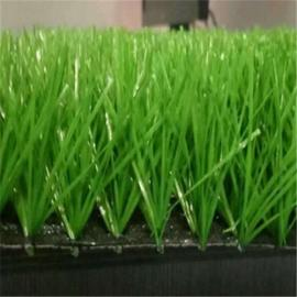 江瀚 人工草坪 绿化草坪 景观草坪 装饰草坪