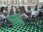 鸽舍玻璃钢地网质量保证 发货快