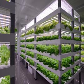 led超薄款植物灯 室内货架植物补光灯