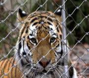 304不锈钢丝绳网 动物园围栏丝绳网 框架式不锈钢绳网定做