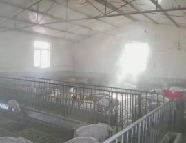 养猪场喷雾除臭设备-?#32431;?#21943;雾净化