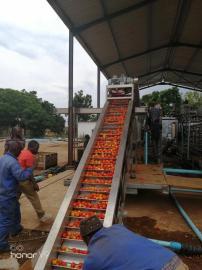 果蔬清洗输送设备