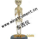 #胎儿骨骼模型*
