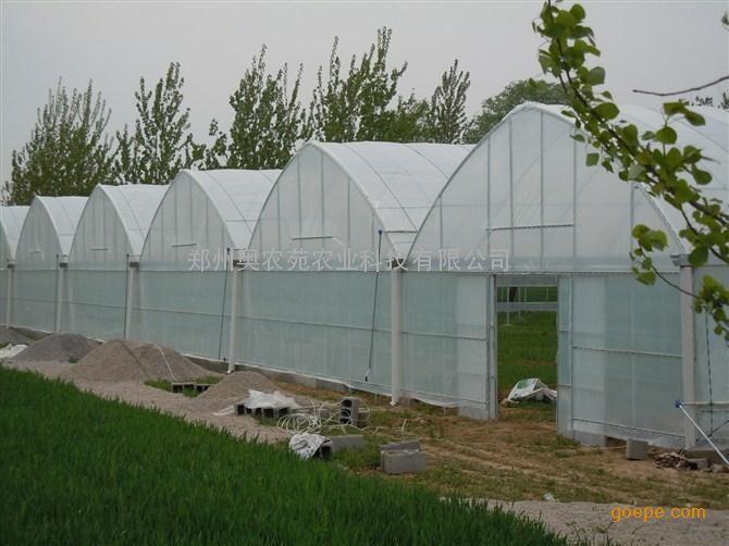 连栋温室-大型连栋式塑料温室