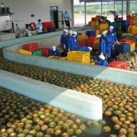 中小式菠萝汁生产线&果汁饮料加工设备