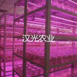 高节能培养架反光隔热板型(LED混合 PLT-I) 汉光农业