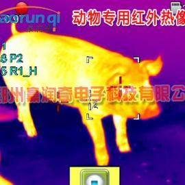 动物红外热像仪,动物测温仪测猪牛羊体温计