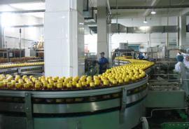 小型金银花茶饮料生产线机器价格加工灌装设备